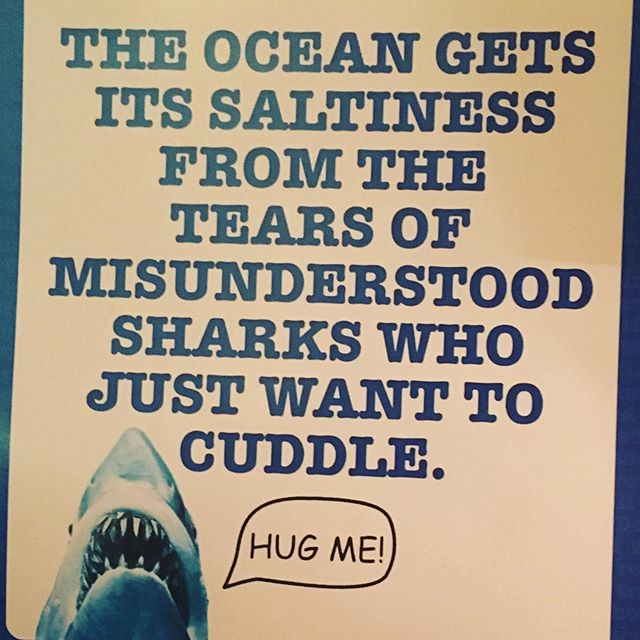 Totally true. Obviously. #truthorlie #sharks @randomhousekids @michael_slackart