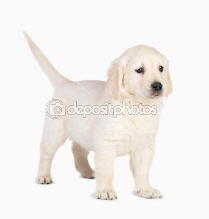 puppy_01.jpg