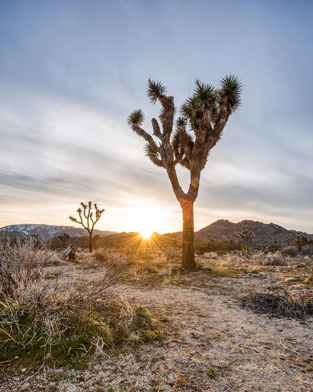 Spent the last two weekends in the desert. This was Joshua Tree last weekend. There was still a bit of snow on the ground in the shady areas and the hills surrounding the park were basically covered❄️ . . . . . #joshuatree #gramslayers #igtravel #roadtrippers #lonelyplanet #roadtrip #instagood #travel #natgeo #worldtravelbook #exploretocreate #travelstoke #theoutbound #exploreeverything #camplife #seekthesimplicity #travelphotography #vanlife #nationalparks #allaboutadventure #roadtripusa #visualsoflife #travelgram #peoplescreatives #havecamerawilltravel #travelphotography #instatravel #awakethesoul #optoutside #instago