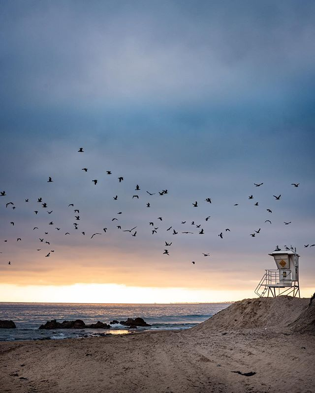 Birds of a feather flock together. Another one from the archives! . . . . . #laguna #gramslayers #igtravel #roadtrippers #lonelyplanet #roadtrip #instagood #travel #natgeo #worldtravelbook #exploretocreate #travelstoke #theoutbound #exploreeverything #camplife #seekthesimplicity #travelphotography #vanlife #nationalparks #allaboutadventure #roadtripusa #visualsoflife #travelgram #peoplescreatives #havecamerawilltravel #travelphotography #instatravel #awakethesoul #optoutside #instago