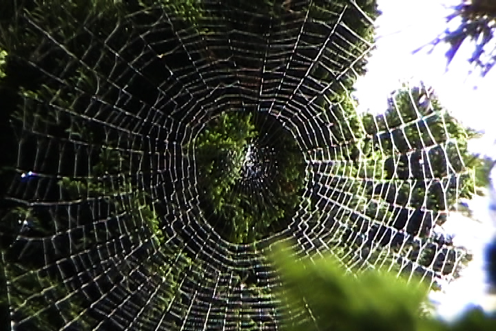cobweb still TNL.jpg
