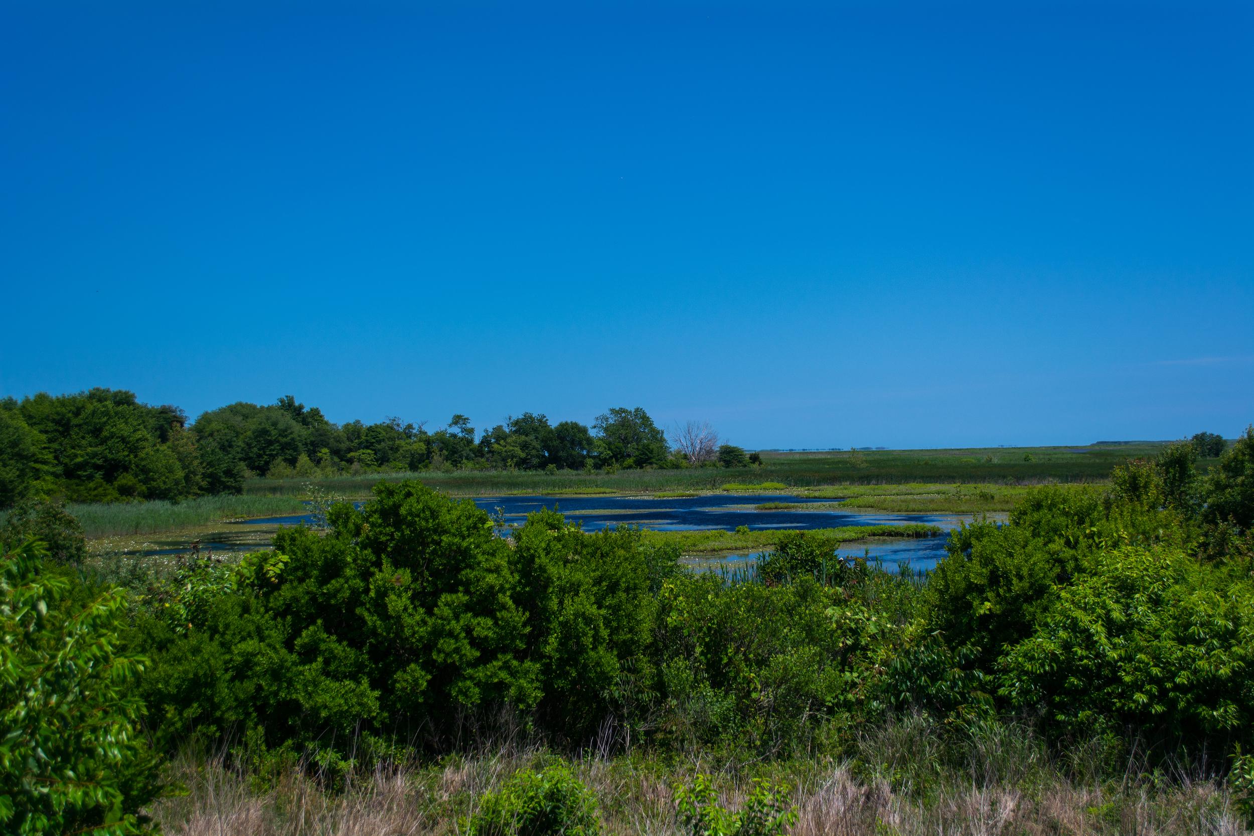 EBF National Wildlife Refuge-0315.jpg