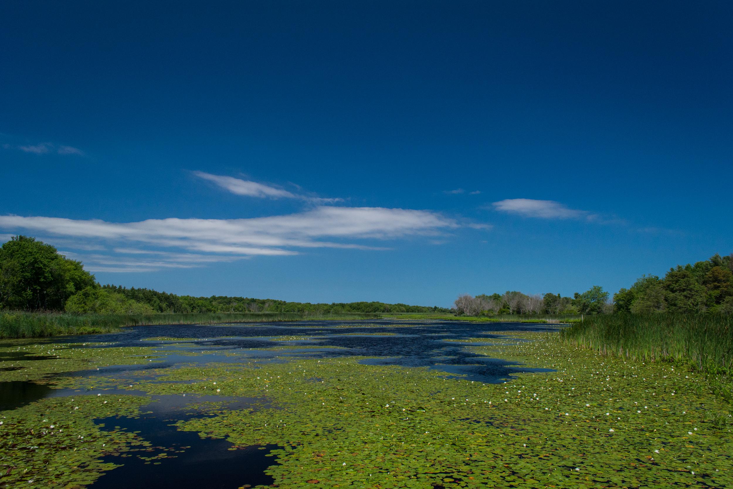 EBF National Wildlife Refuge-0400.jpg