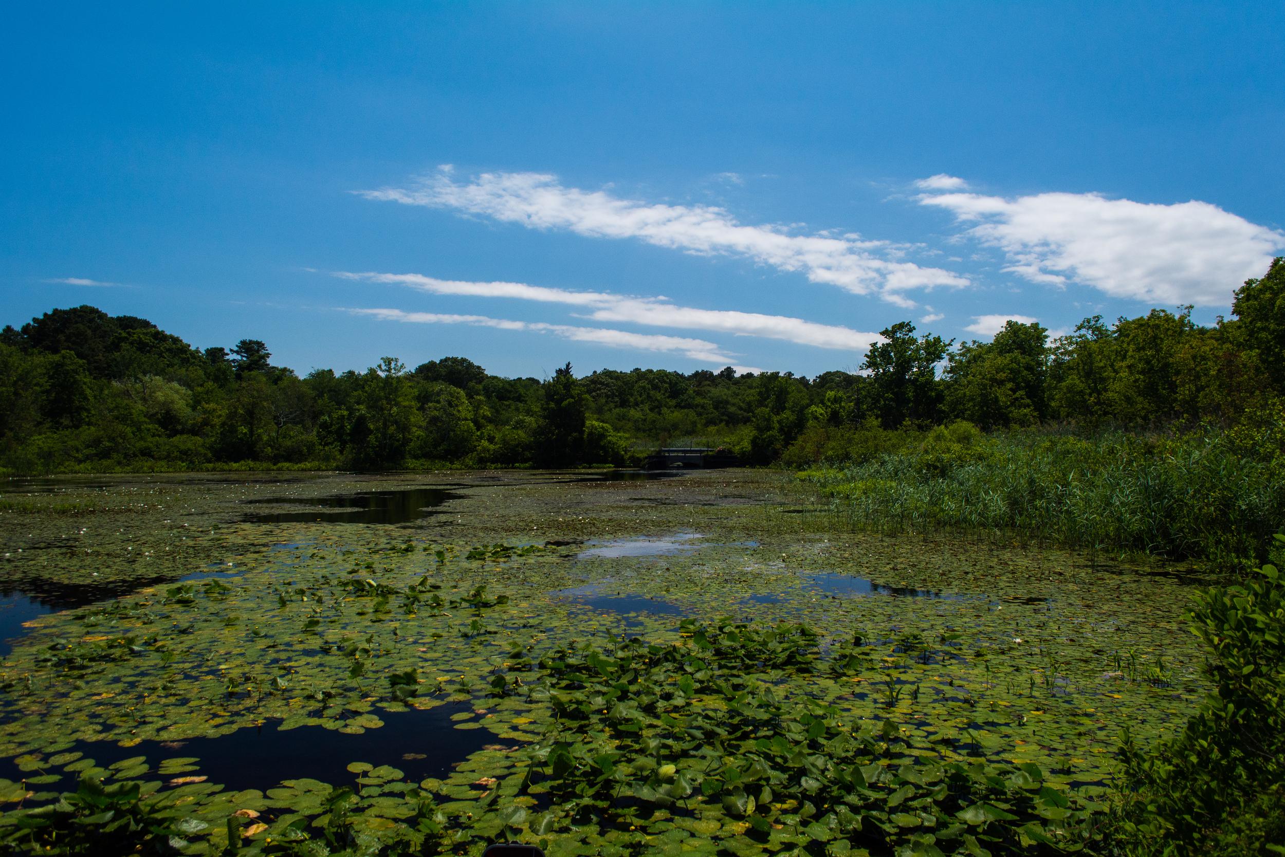 EBF National Wildlife Refuge-0406.jpg