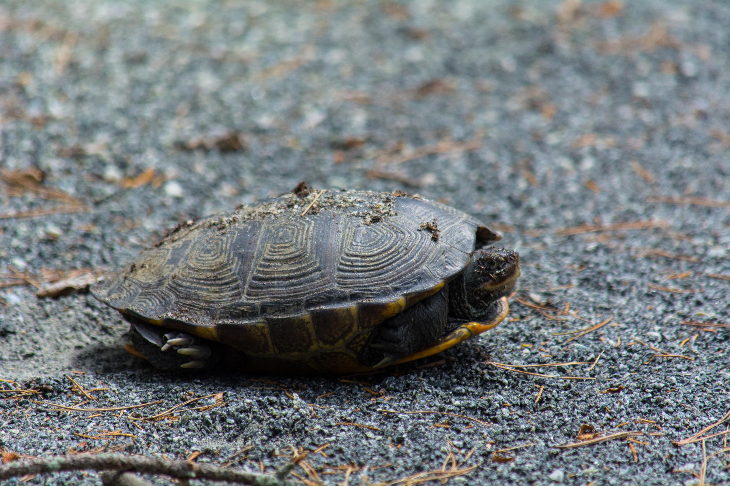 EBF National Wildlife Refuge-0181.jpg