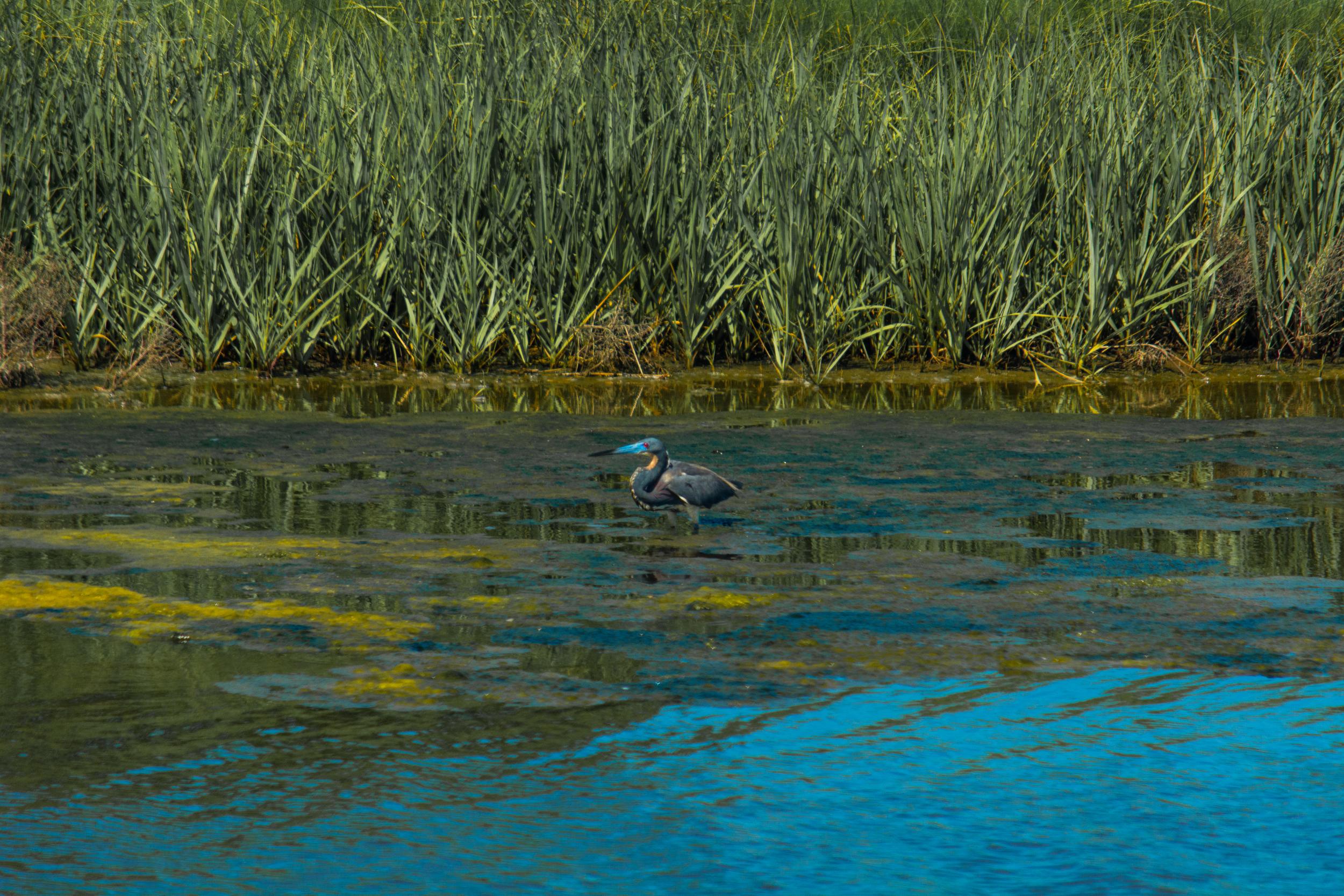 EBF National Wildlife Refuge-0595.jpg