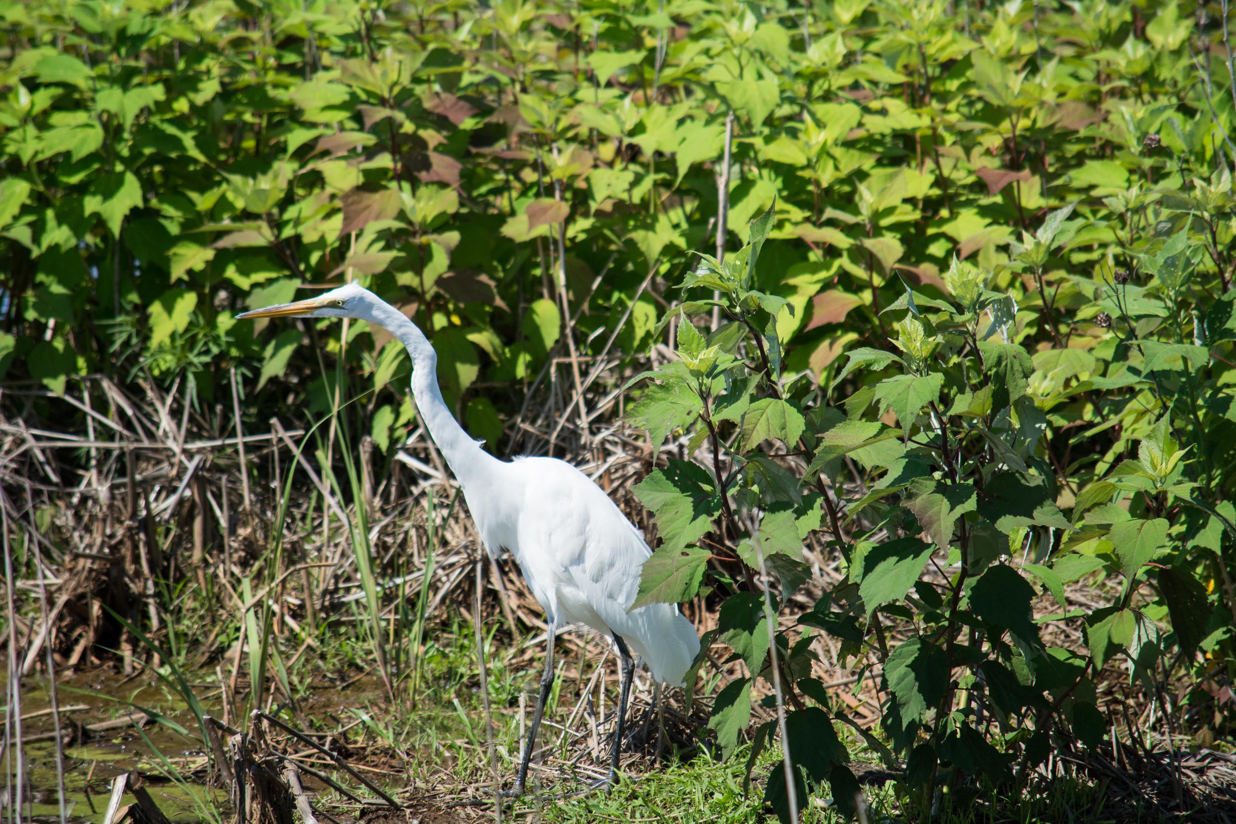 EBF National Wildlife Refuge-0531.jpg