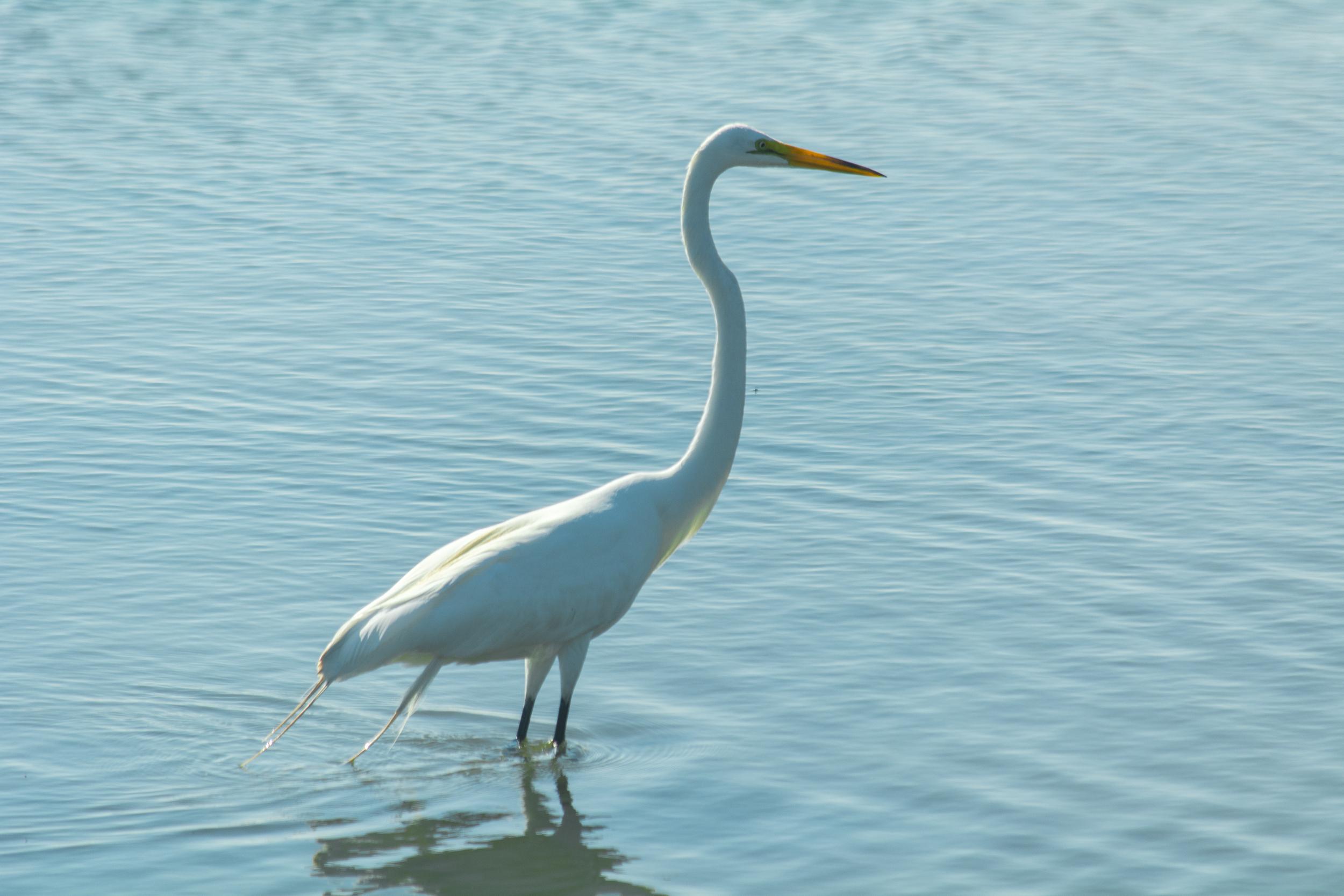 EBF National Wildlife Refuge-0769.jpg