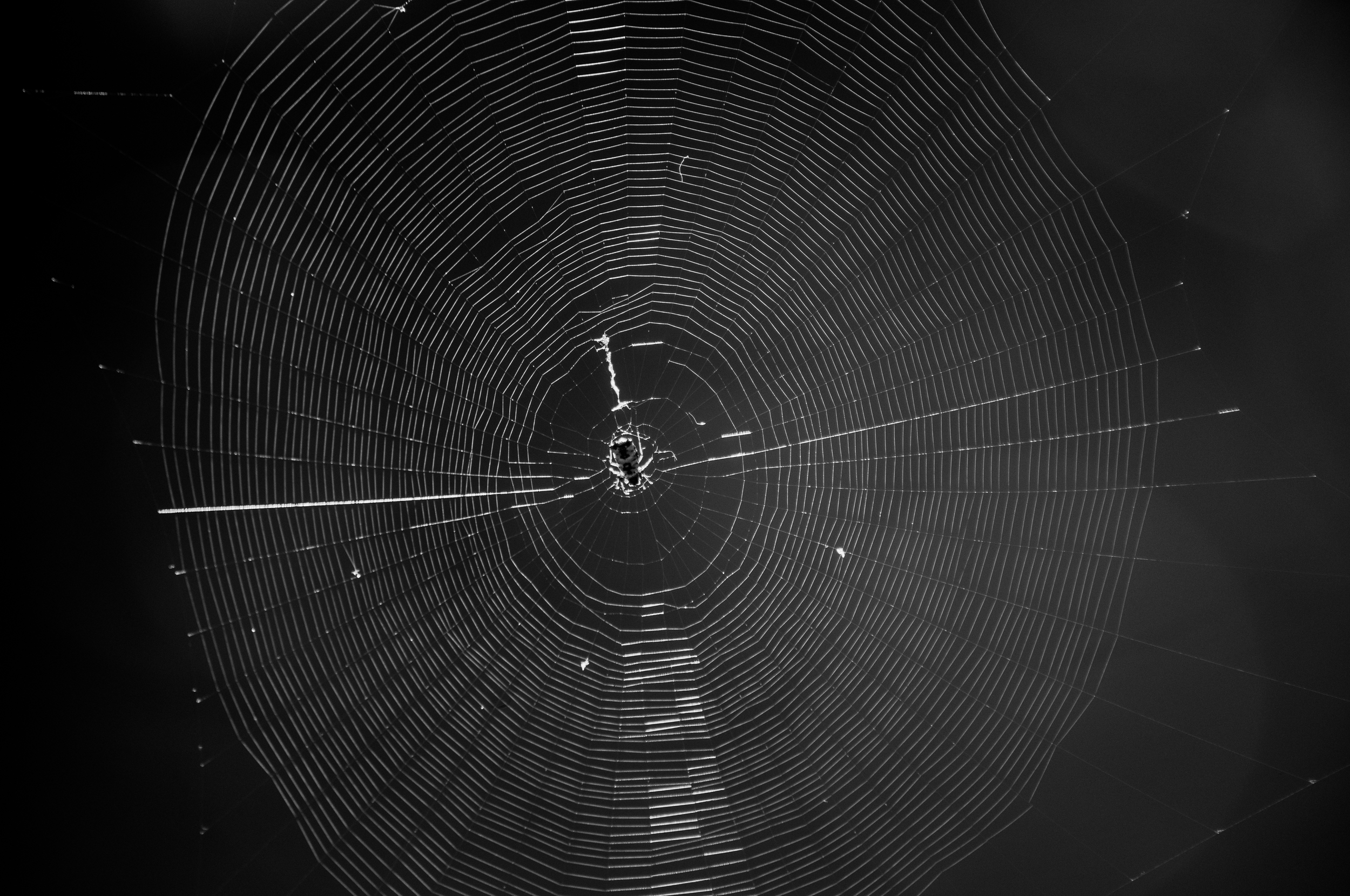 B&W Spider Web