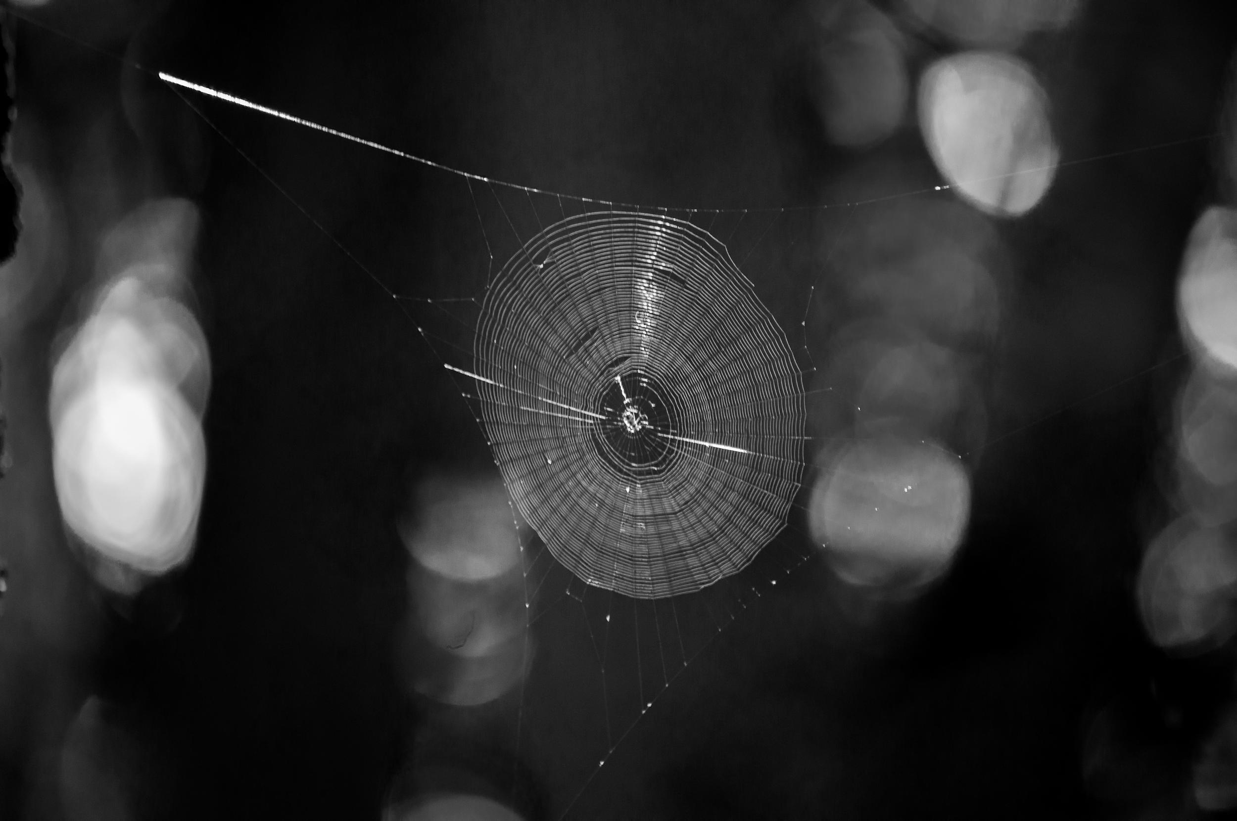 Spider Web B&W