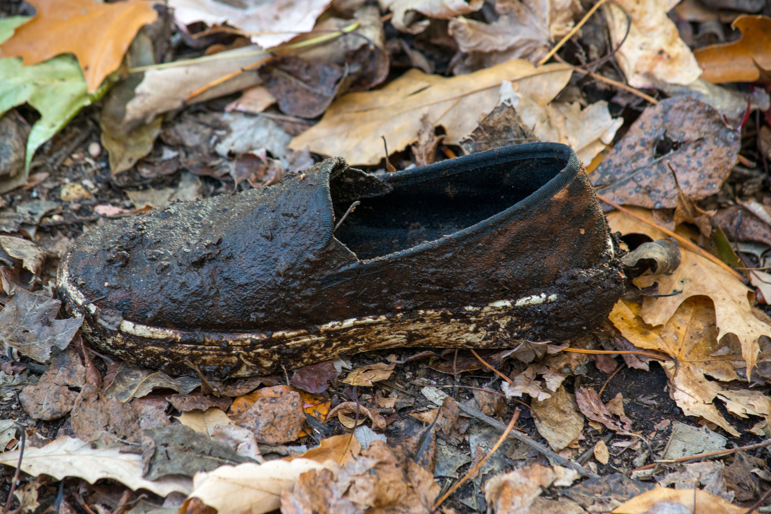 The Lost Muddy Shoe