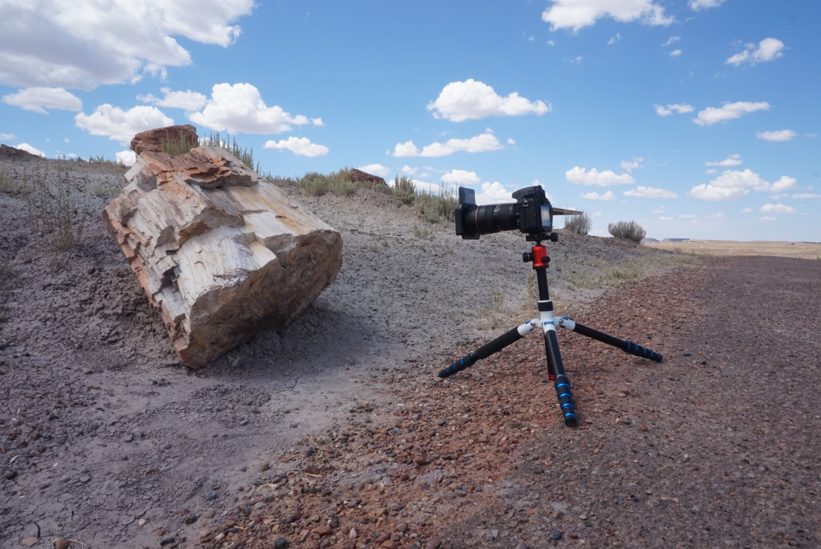 Taken at petrified forest with Sony A5000