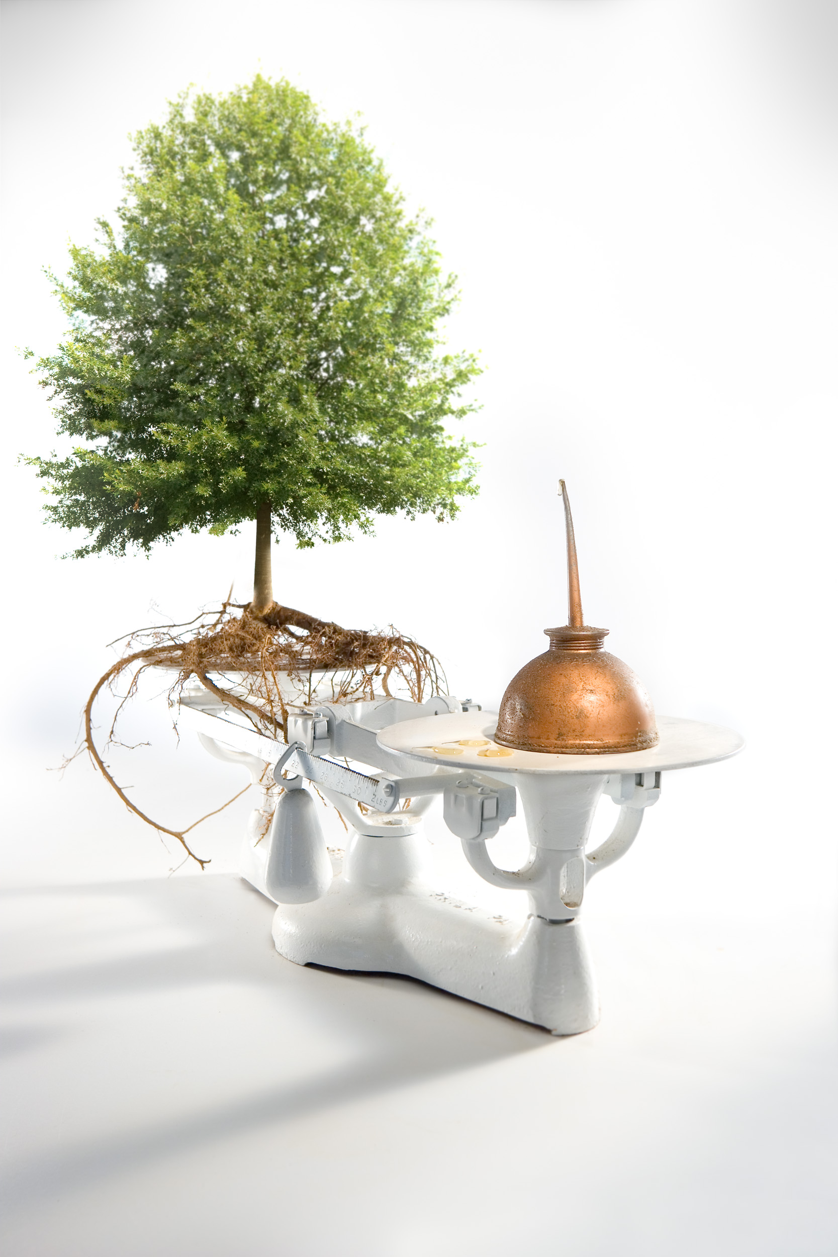 Oiltree.jpg