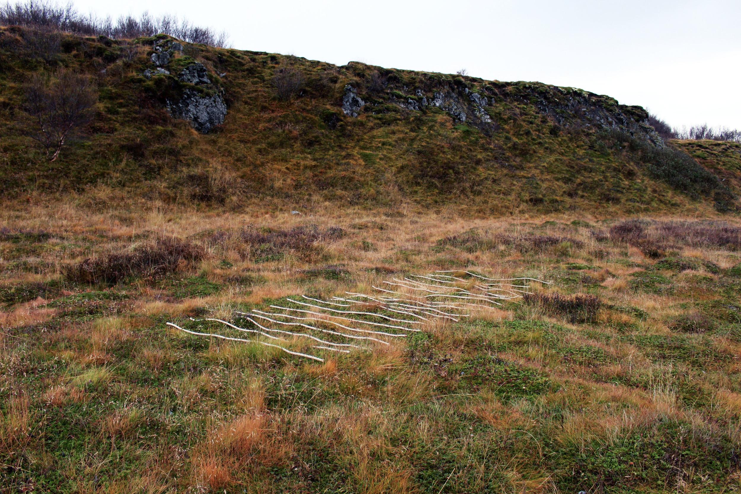 20 Lines_Grass_3.jpg