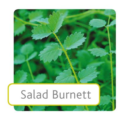 salad-burnett.jpg