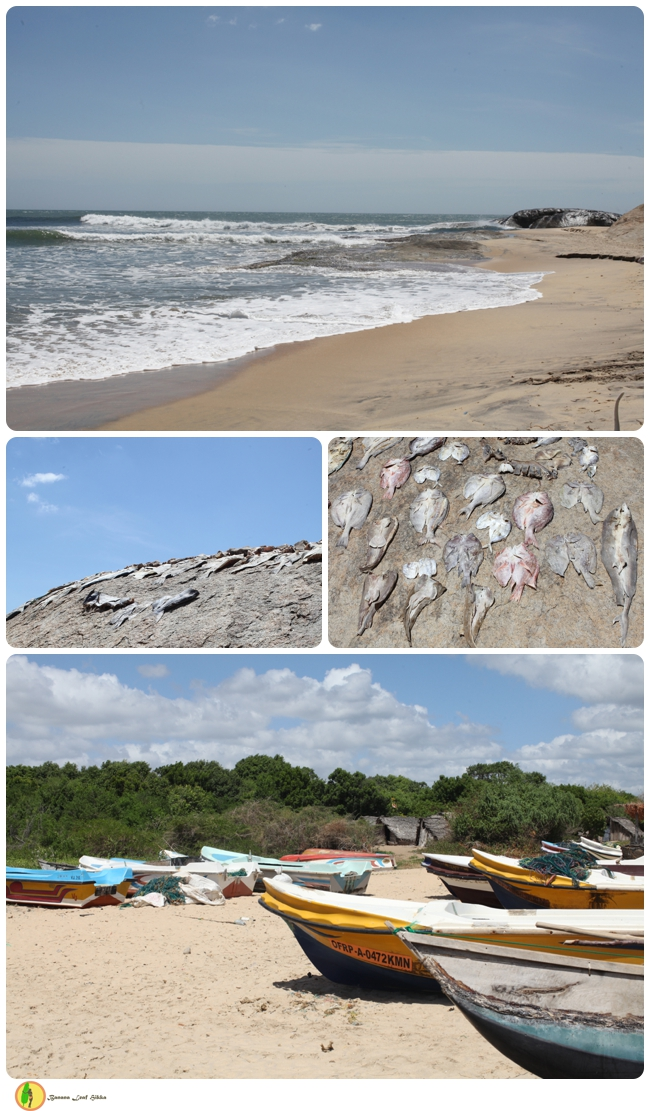 Sri Lanka East Coast Fish