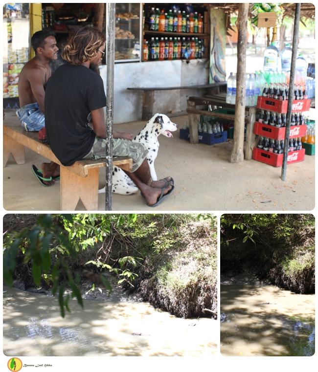Sri Lanka tour crocodiles