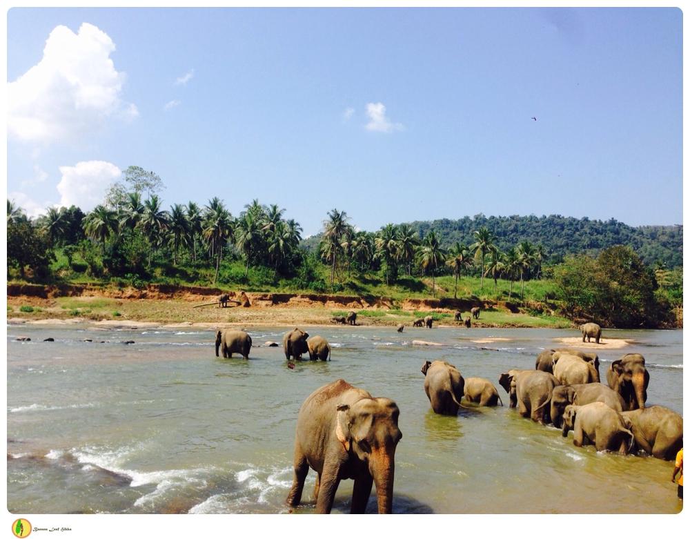 Elephant Orphanage Pinnawala tour
