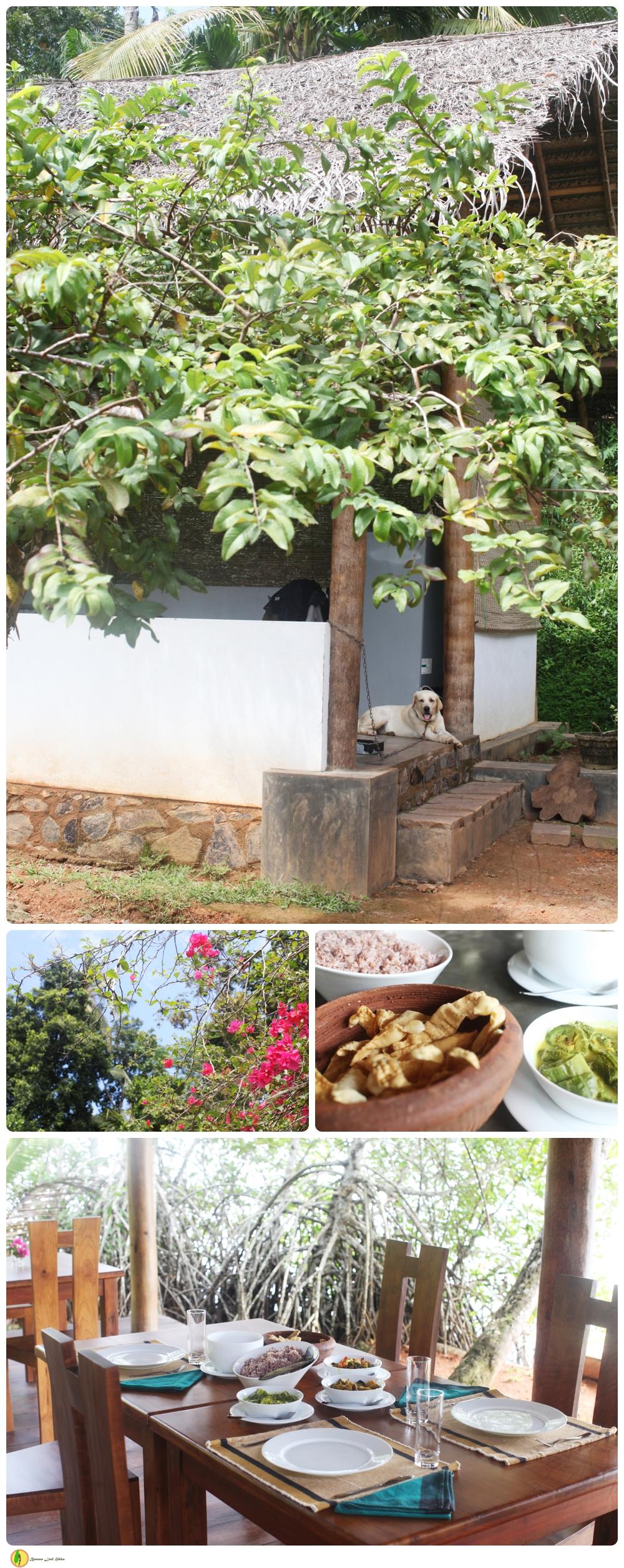 Sri lankan cookery Hikkaduwa