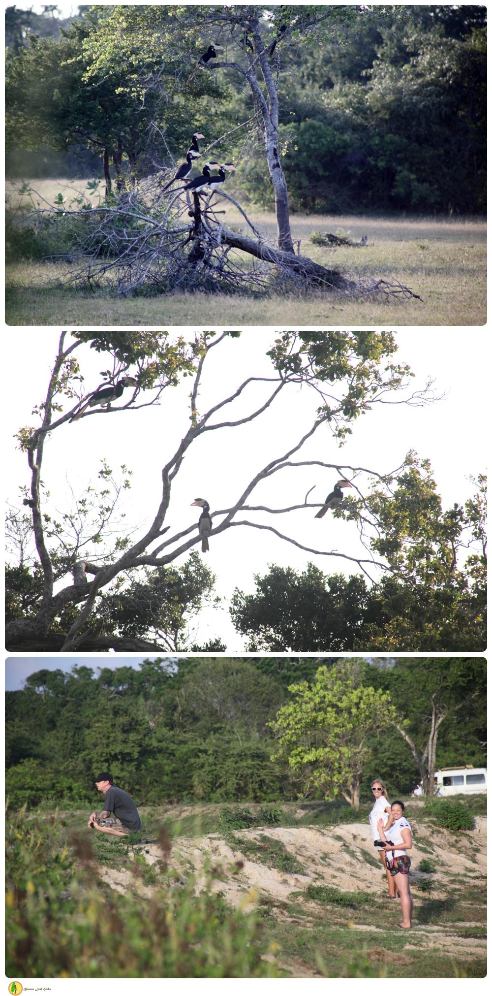 Sri Lanka nature tour