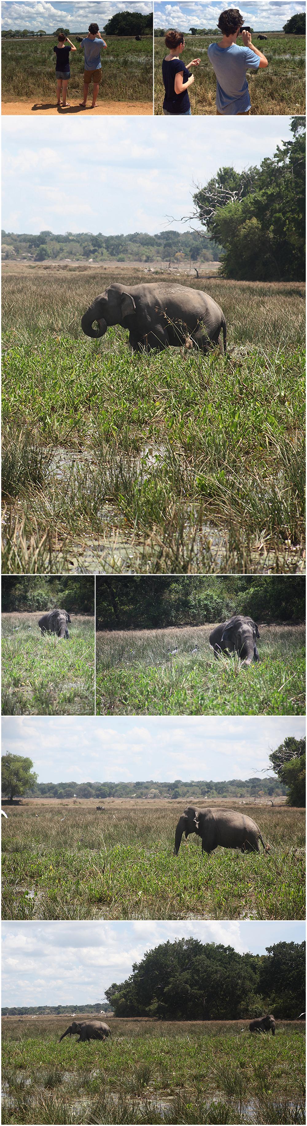 Elephants Kumana National park