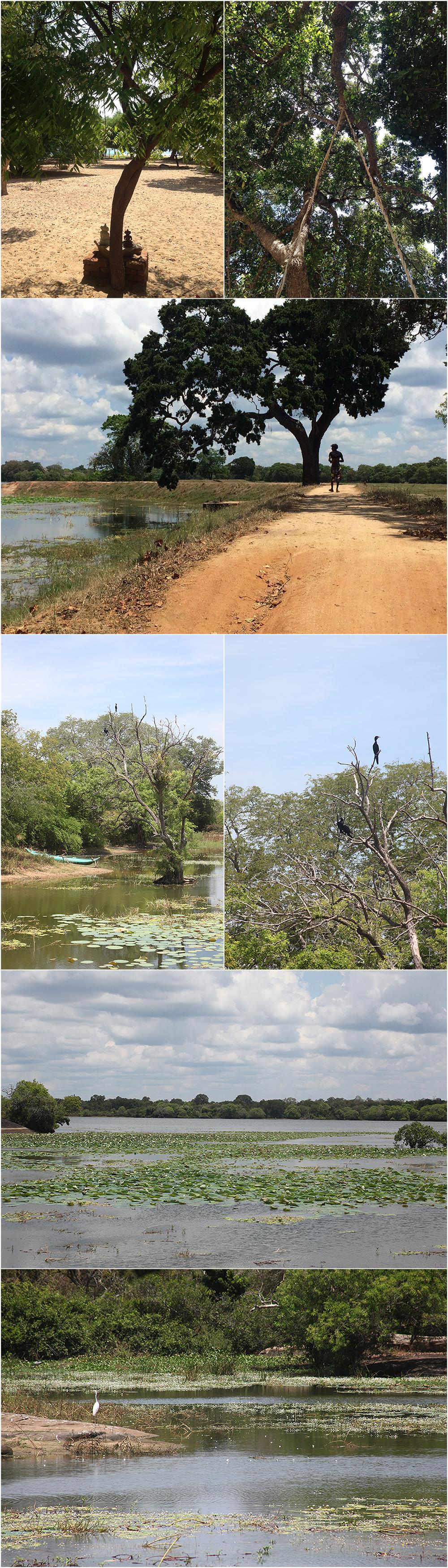 East Coast Sri Lanka nature
