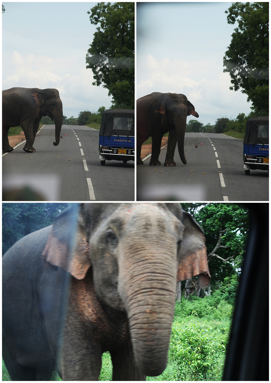Sri Lankan elephant road