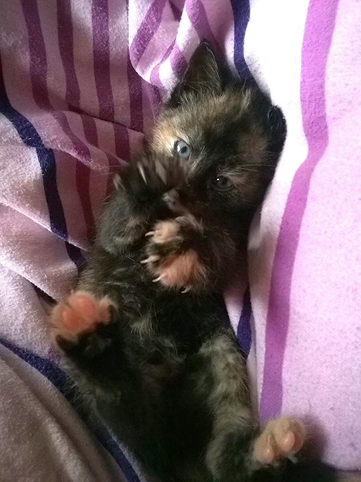 Ani kitten.jpg