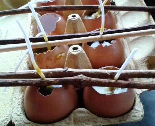 Egg candles 1.jpg