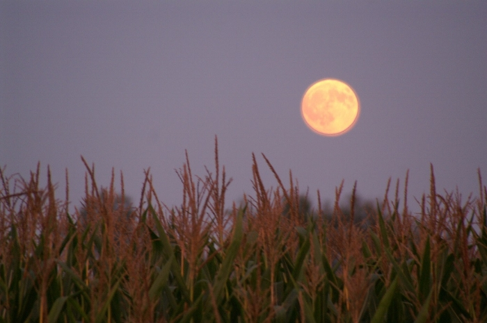 Harvest moon - CC image by Julie Falk.jpg