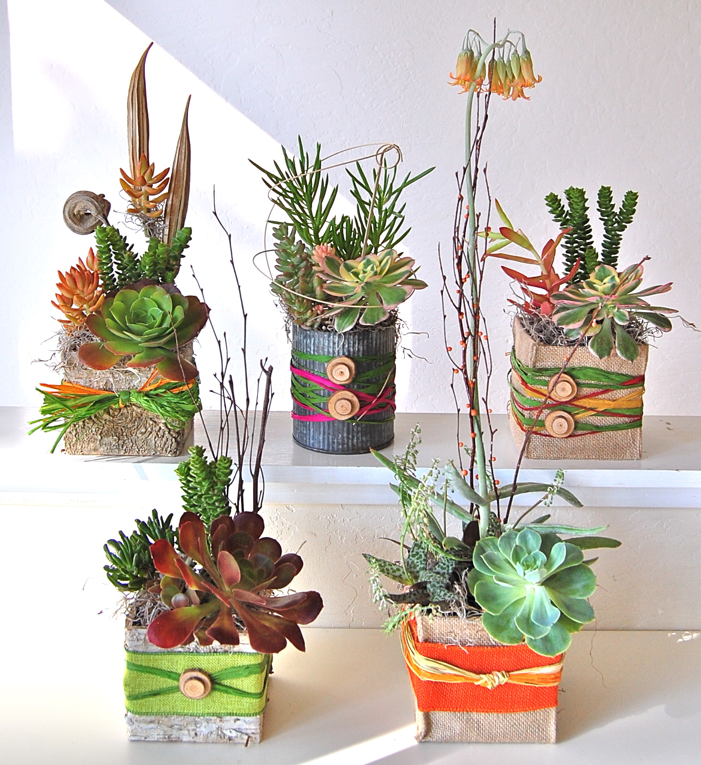 Multi- Succulent Collections.jpg