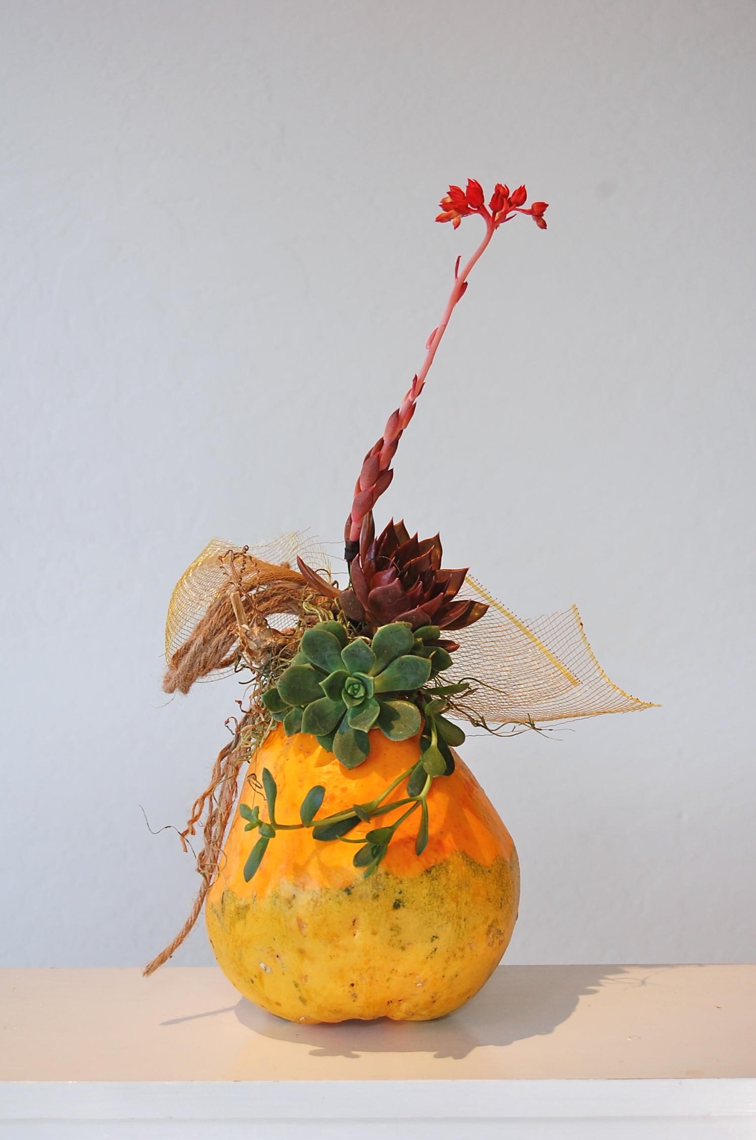 Succulent Enhanced Goard