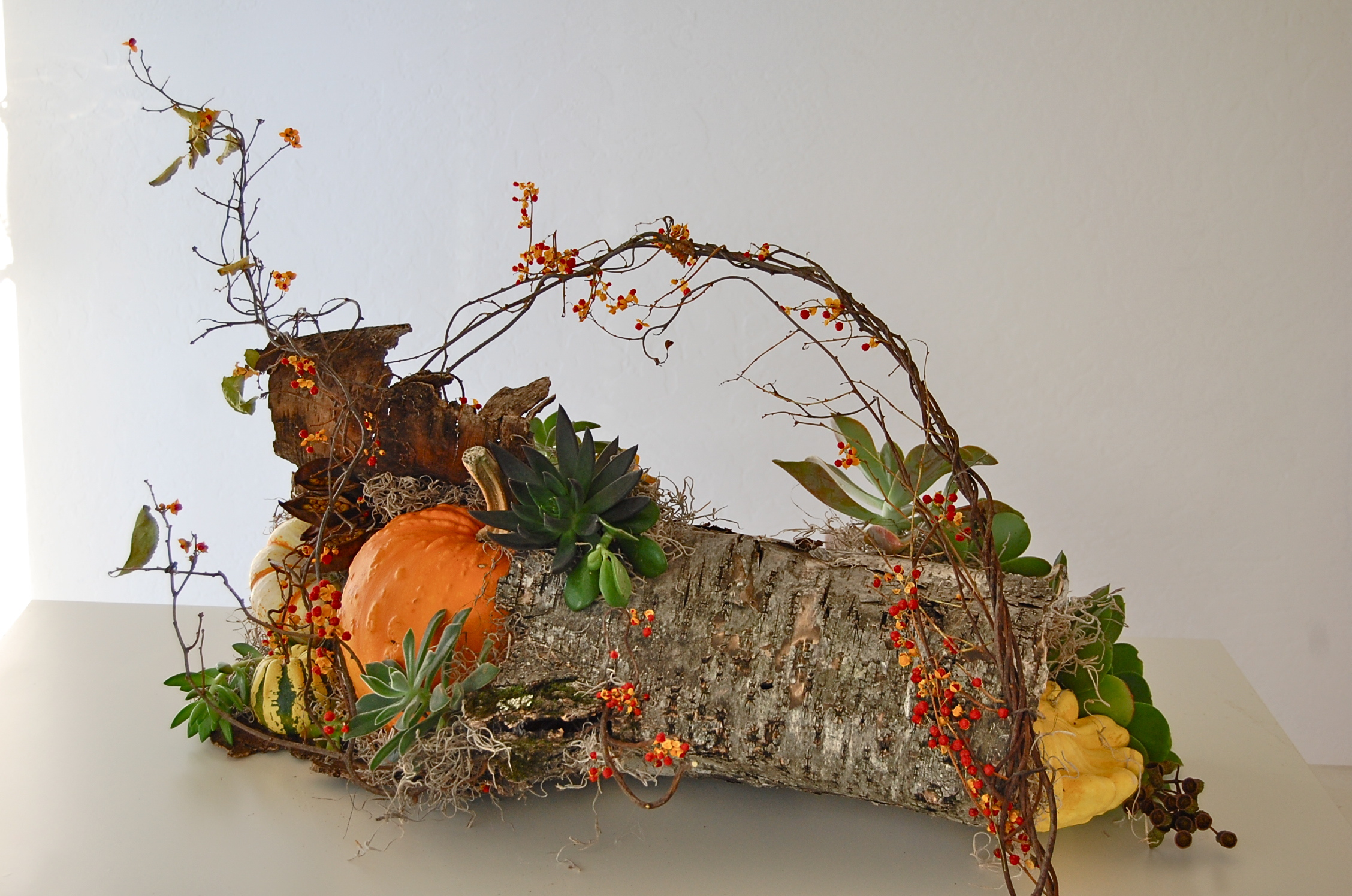 Thanksgiving Centerpiece of Birch Log with Pumpkins and Goards
