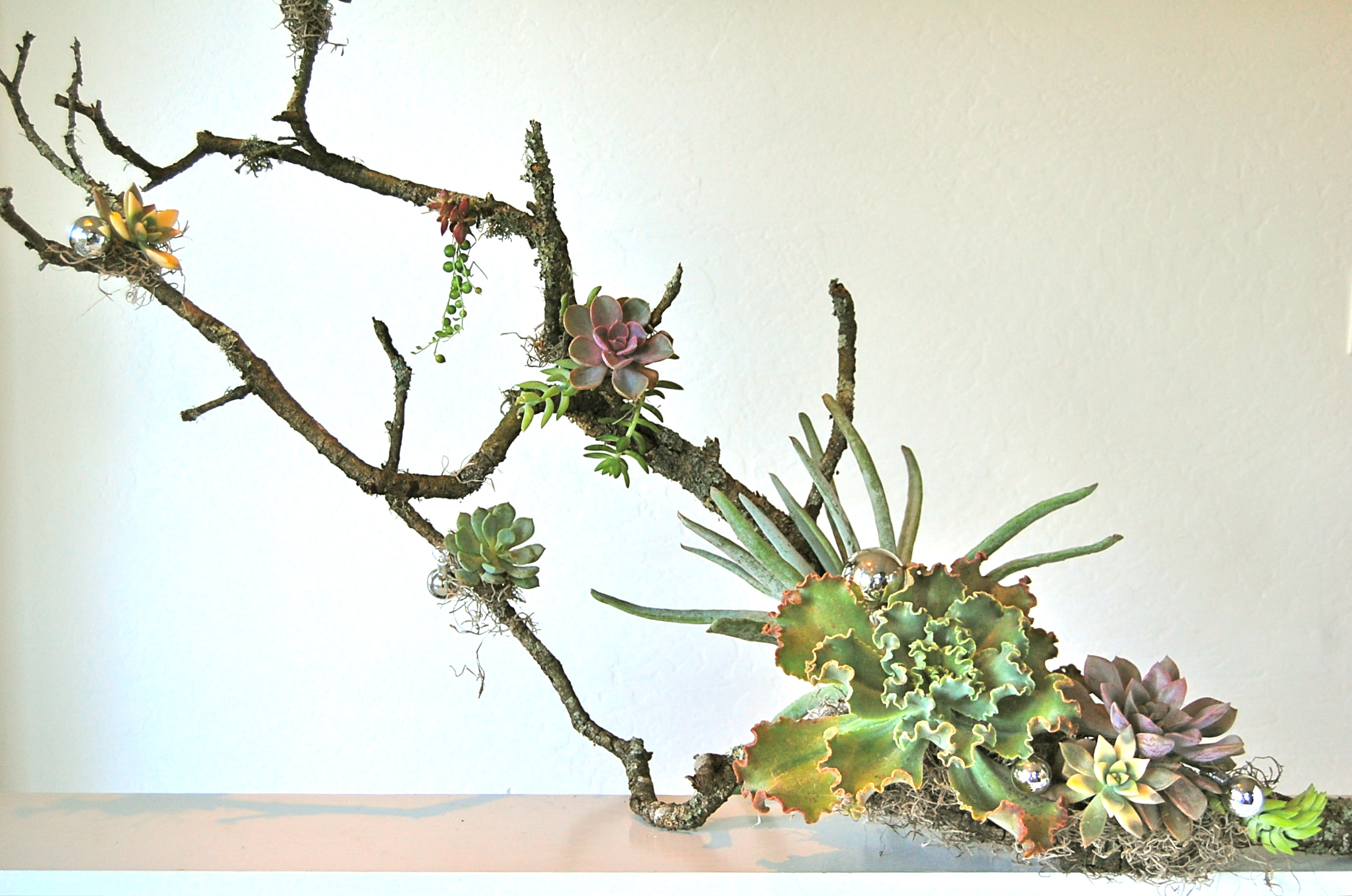 """LARGE BRANCH WITH ASSORTED SUCCULENTS   42""""w x 24""""h (as shown)– various sizes starting at$170. (sizes vary)"""