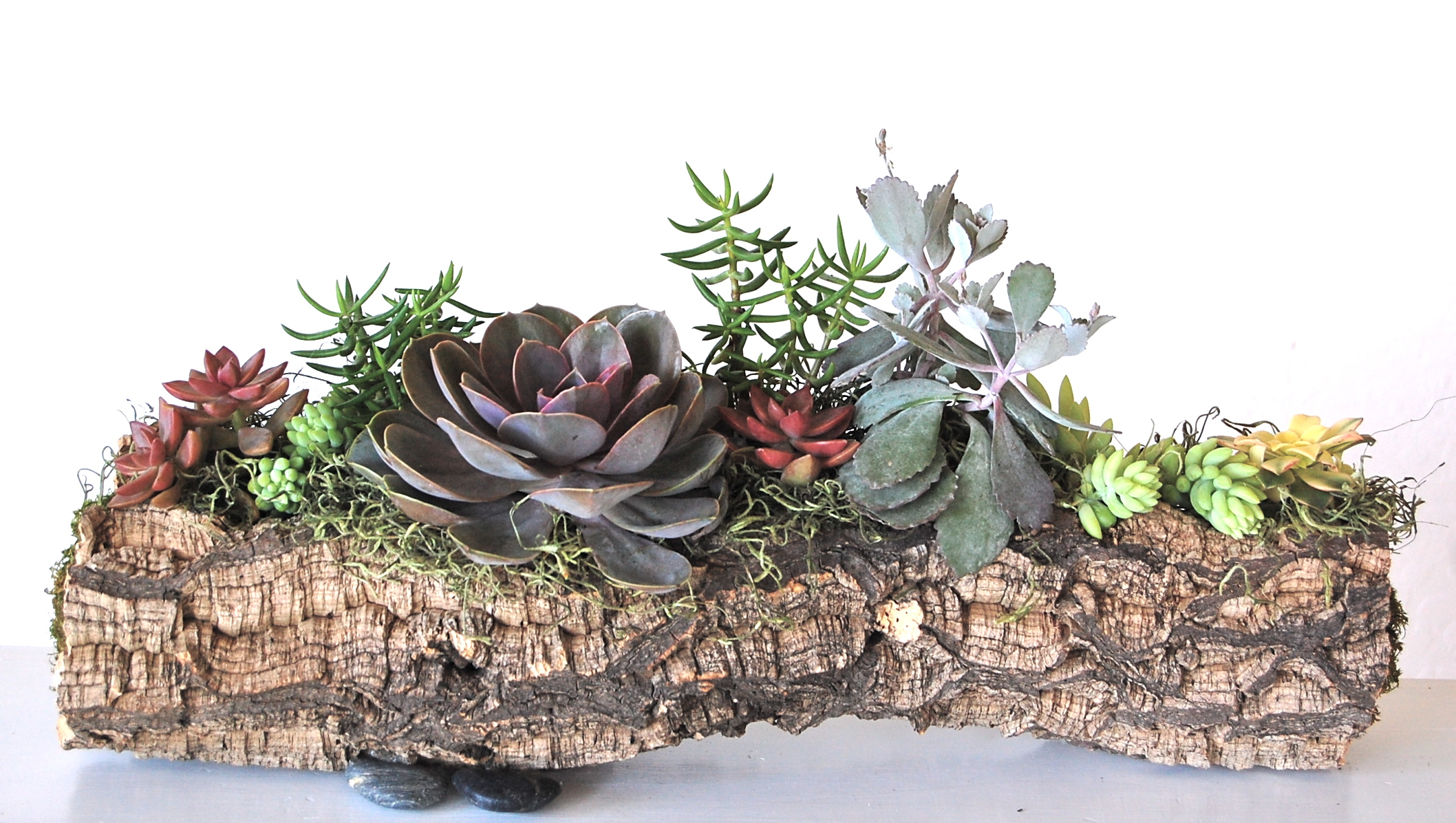 """PLANTED MEDIUM CORK BARK LOG     16""""w x 8""""h (as shown) $135.– various sizes available starting at $75."""