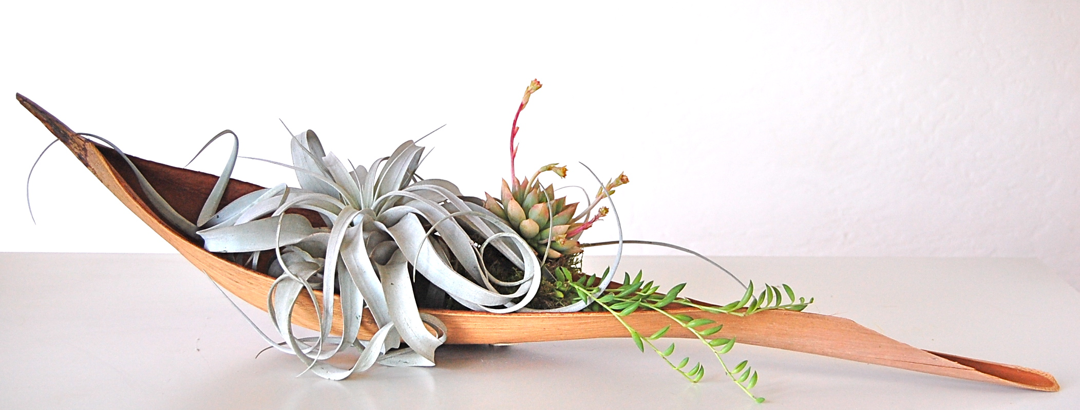 "PALM PADDLE WITH LARGE XEROGRAPHICA AIR PLANT & SMALL SUCCULENTS   Approx. 30"" paddle"