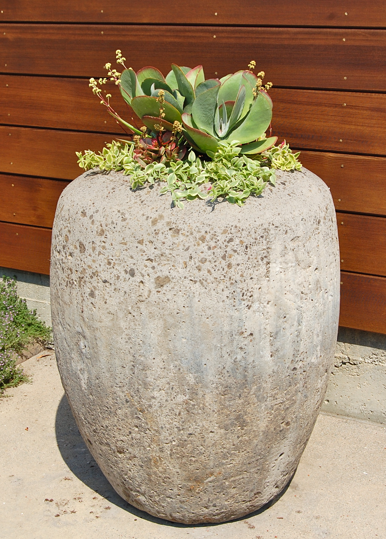 DESIGNED & PLANTED CLIENTS' CONCRETE  URN IN LARKSPUR, CA