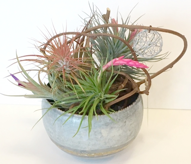 "METAL BOWL WITH AIR PLANTS  6""w x 8""h"
