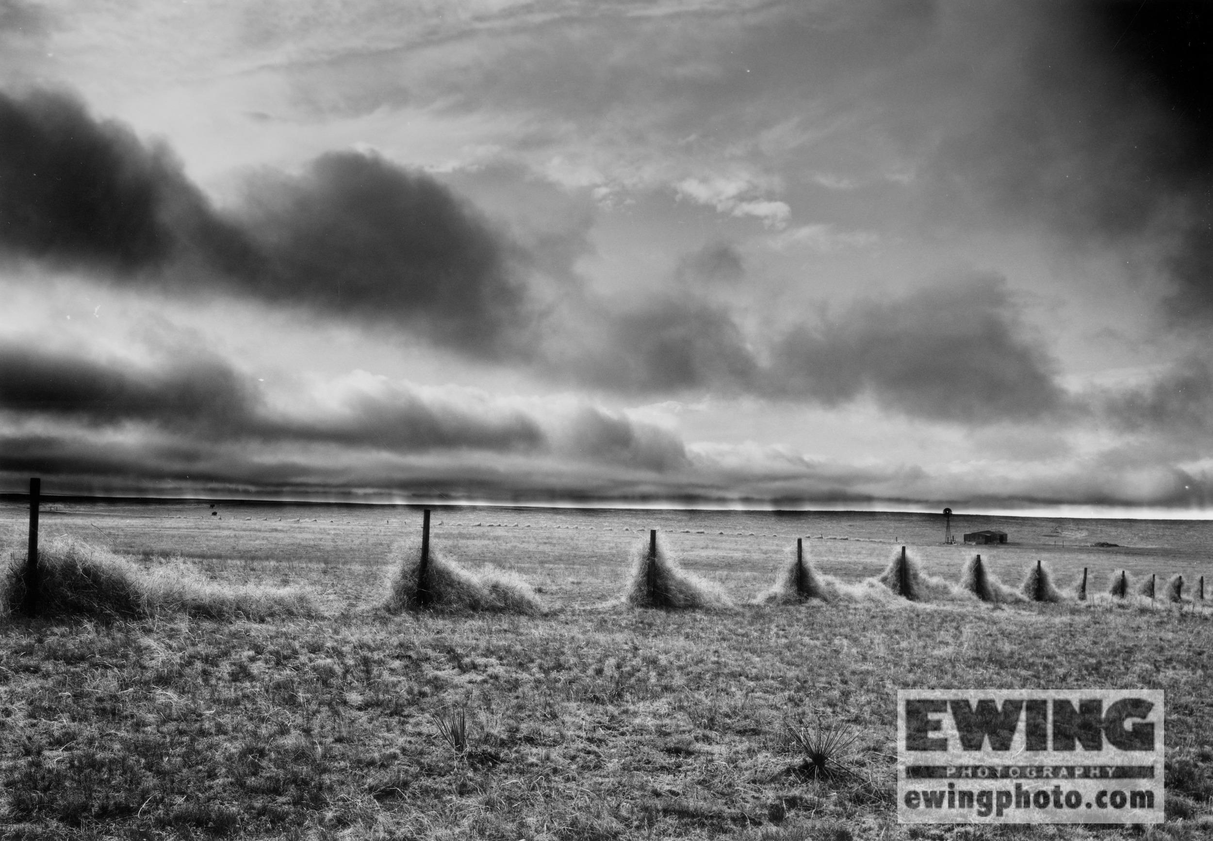 Tumbleweeds In Fenceline Southeast Wyoming