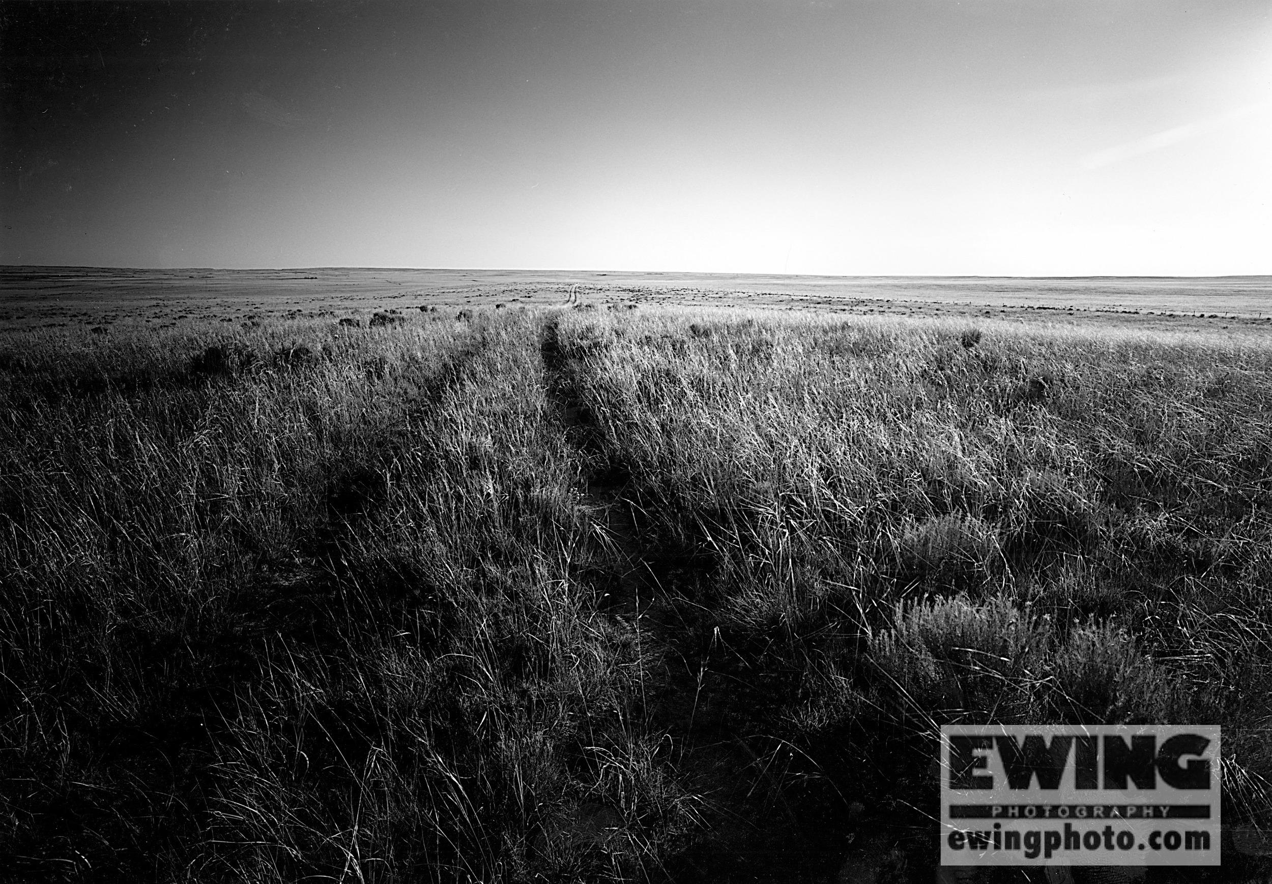 """Two Tracks"", Bohart Ranch Colorado"