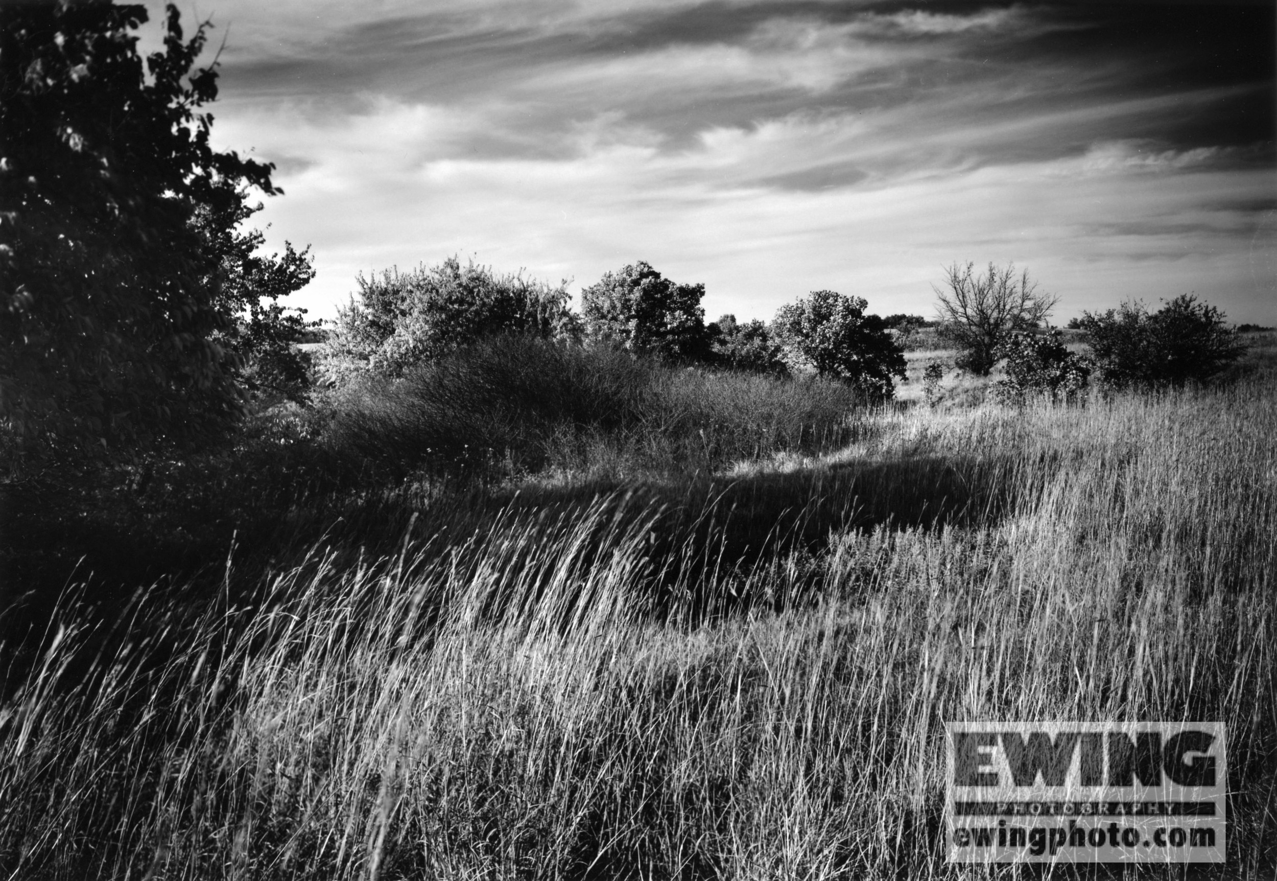 Grasslands at The Land Institute, Hagg Property, Salina, KS