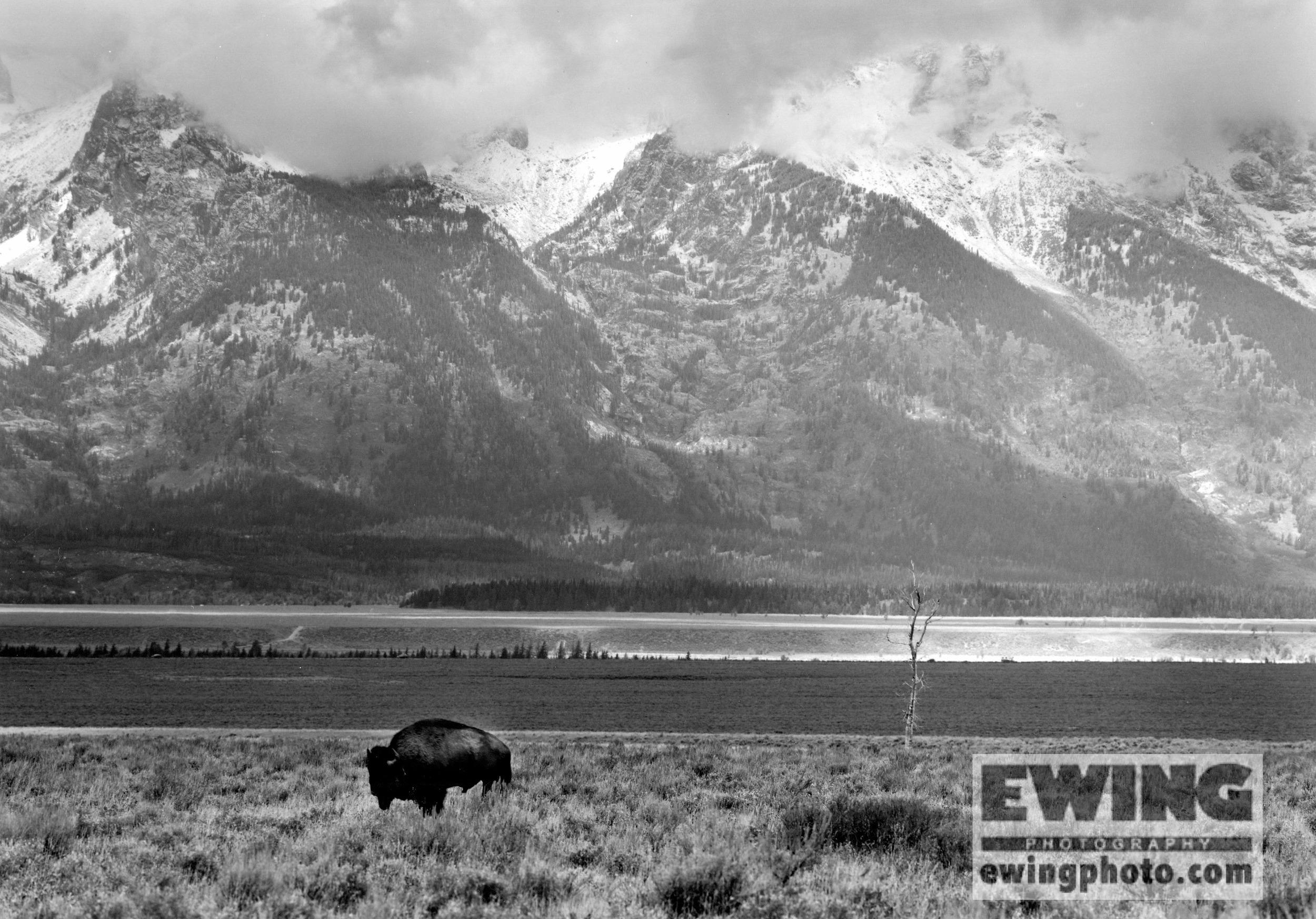 Antelope Flats, Teton National Park, Wyoming