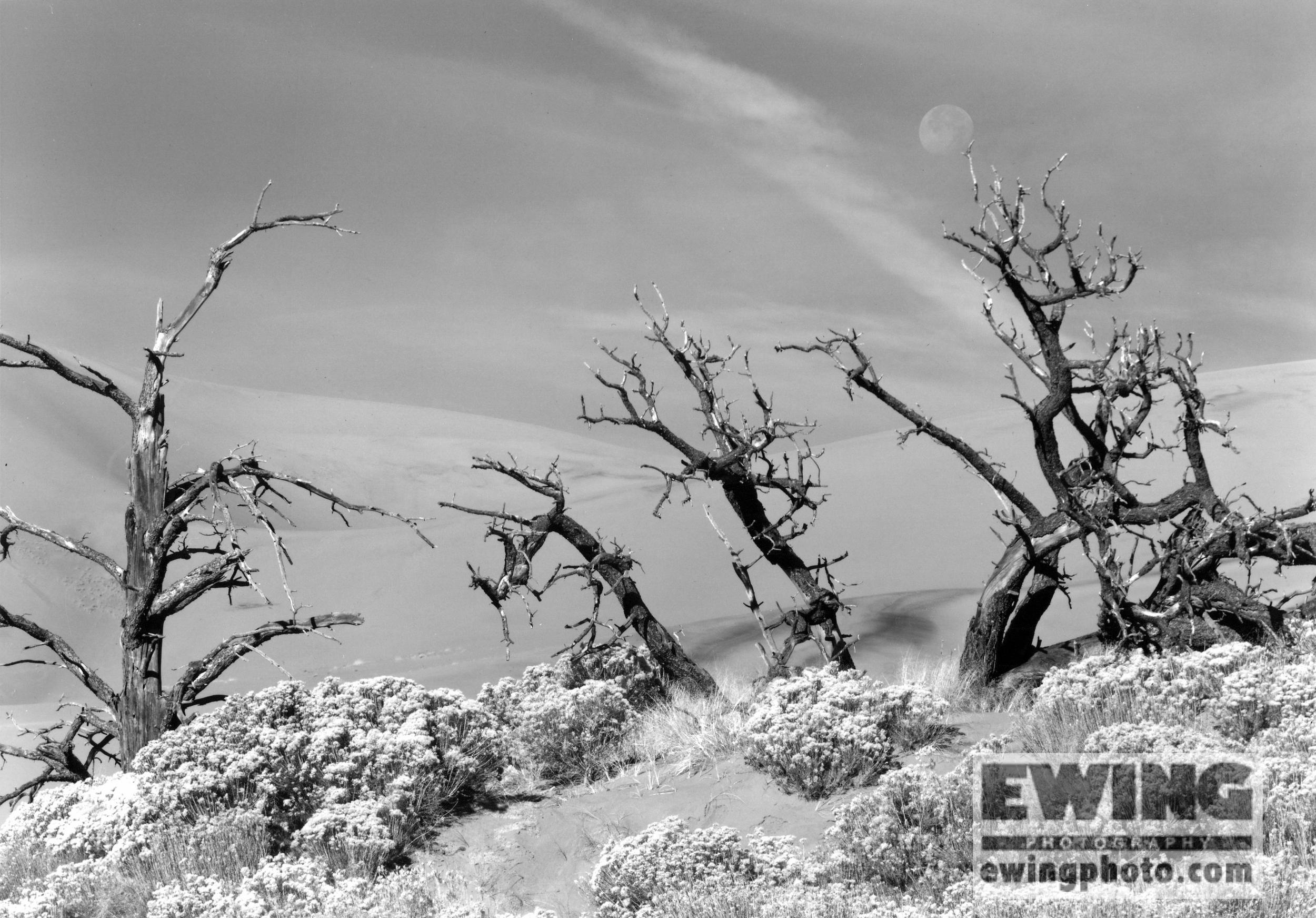 Setting Moon, Great Sand Dunes National Park, Colorado