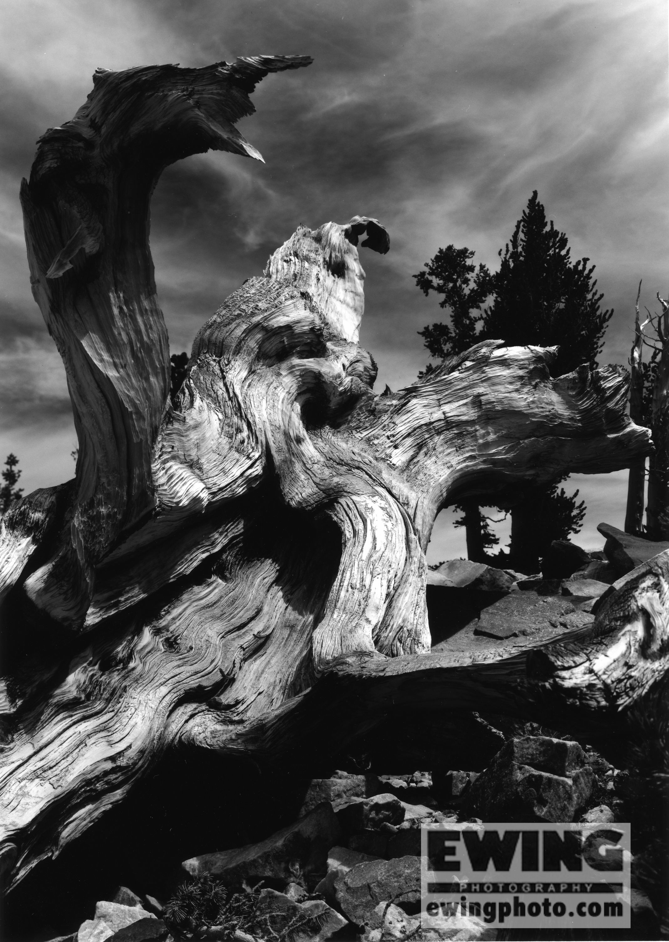 Wheeler Peak, Bristlecone Pine Grove, Great Basin National Park, Nevada