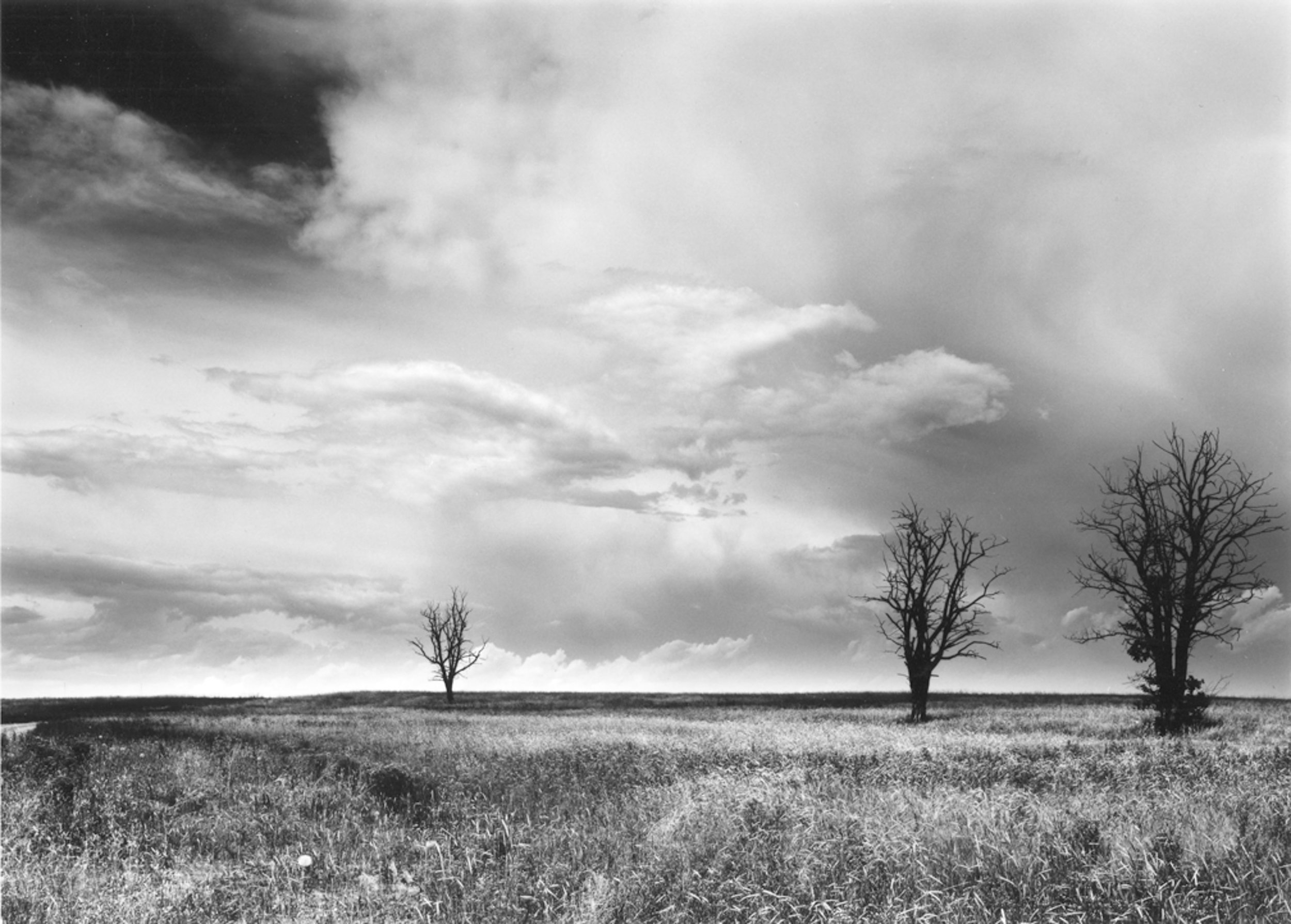 Three Trees, North of Fort Collins Colorado