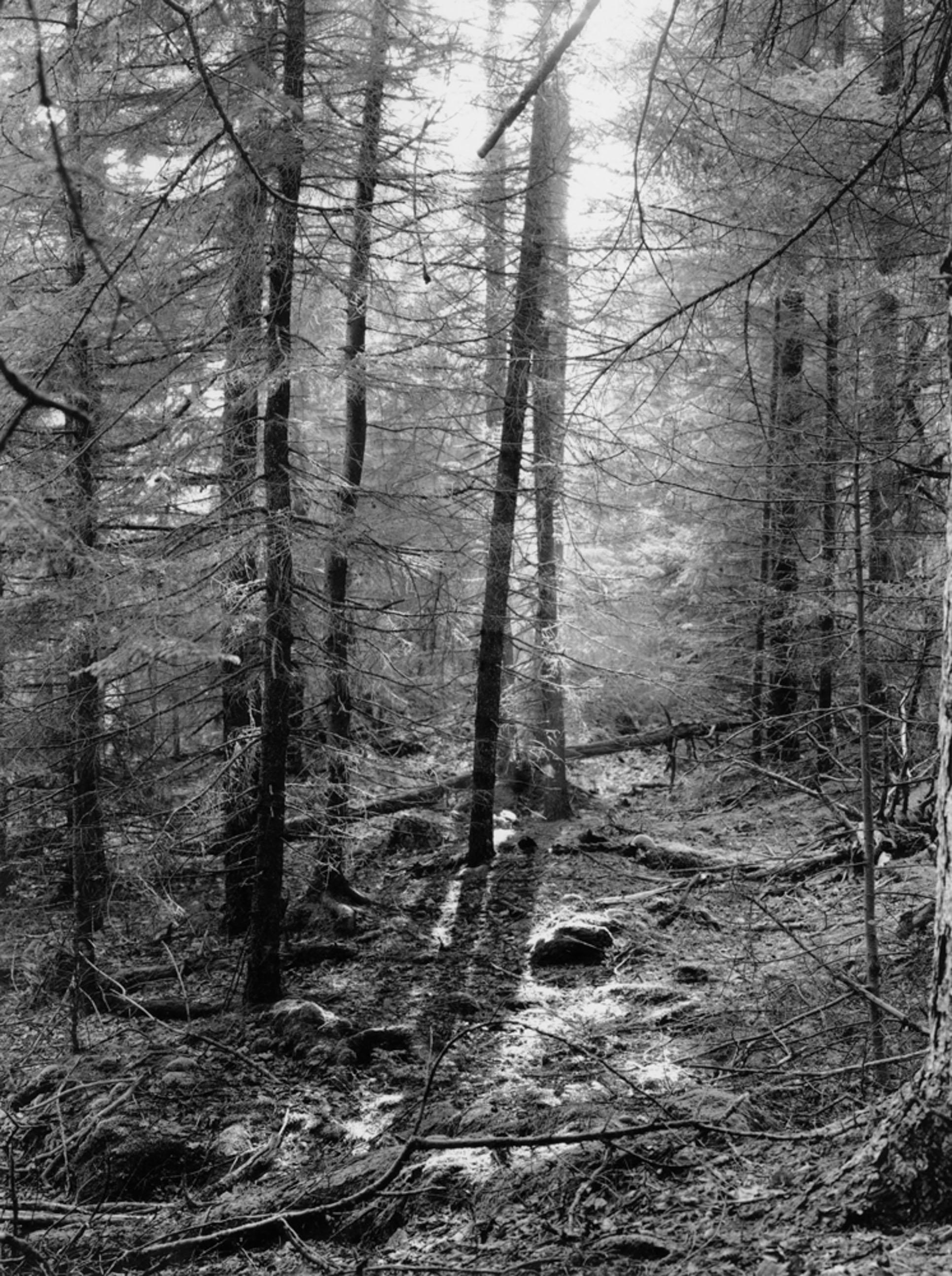 Woods Preble Island, Maine