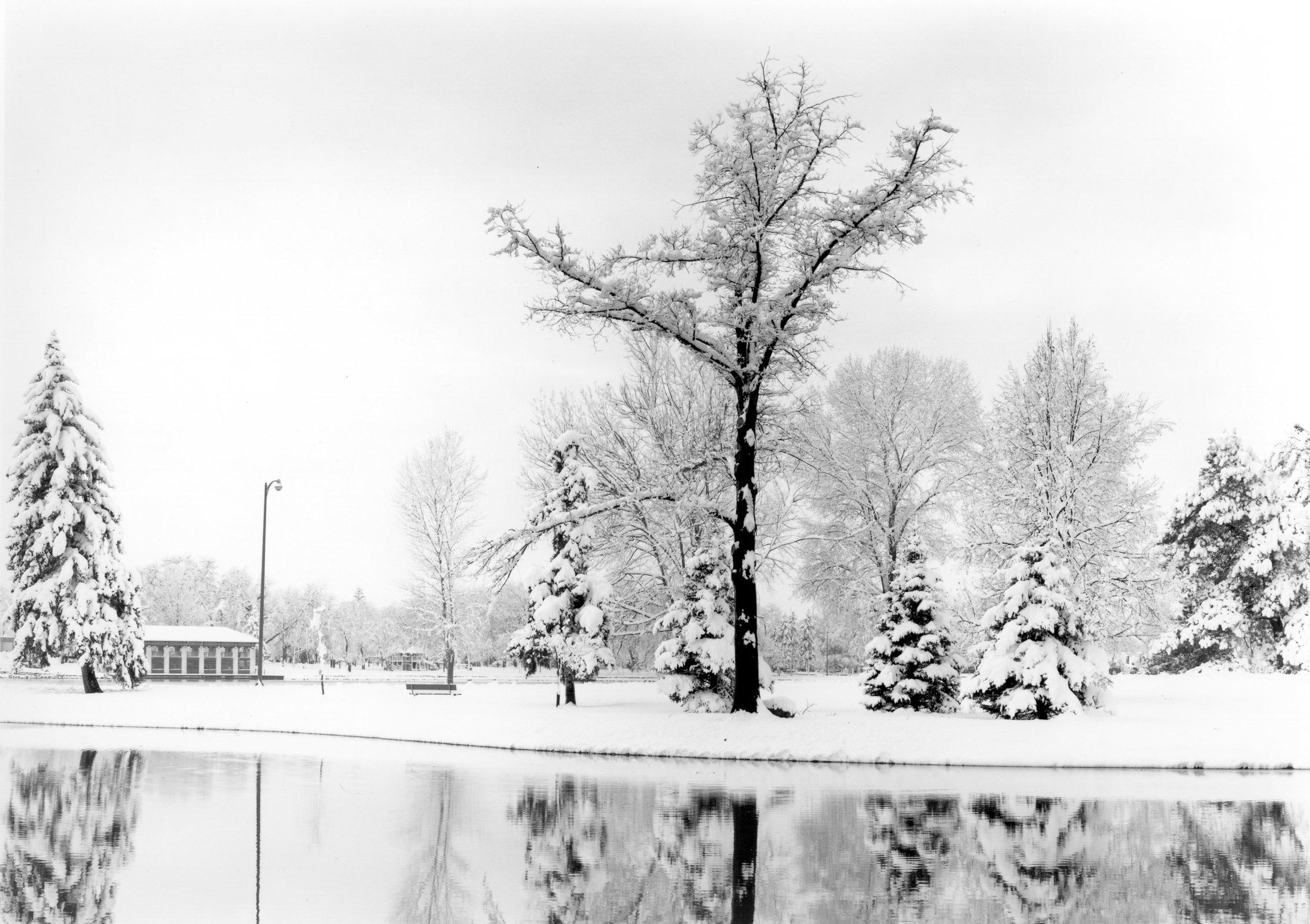 Elm Tree & Boathouse, Washington Park Denver, Colorado