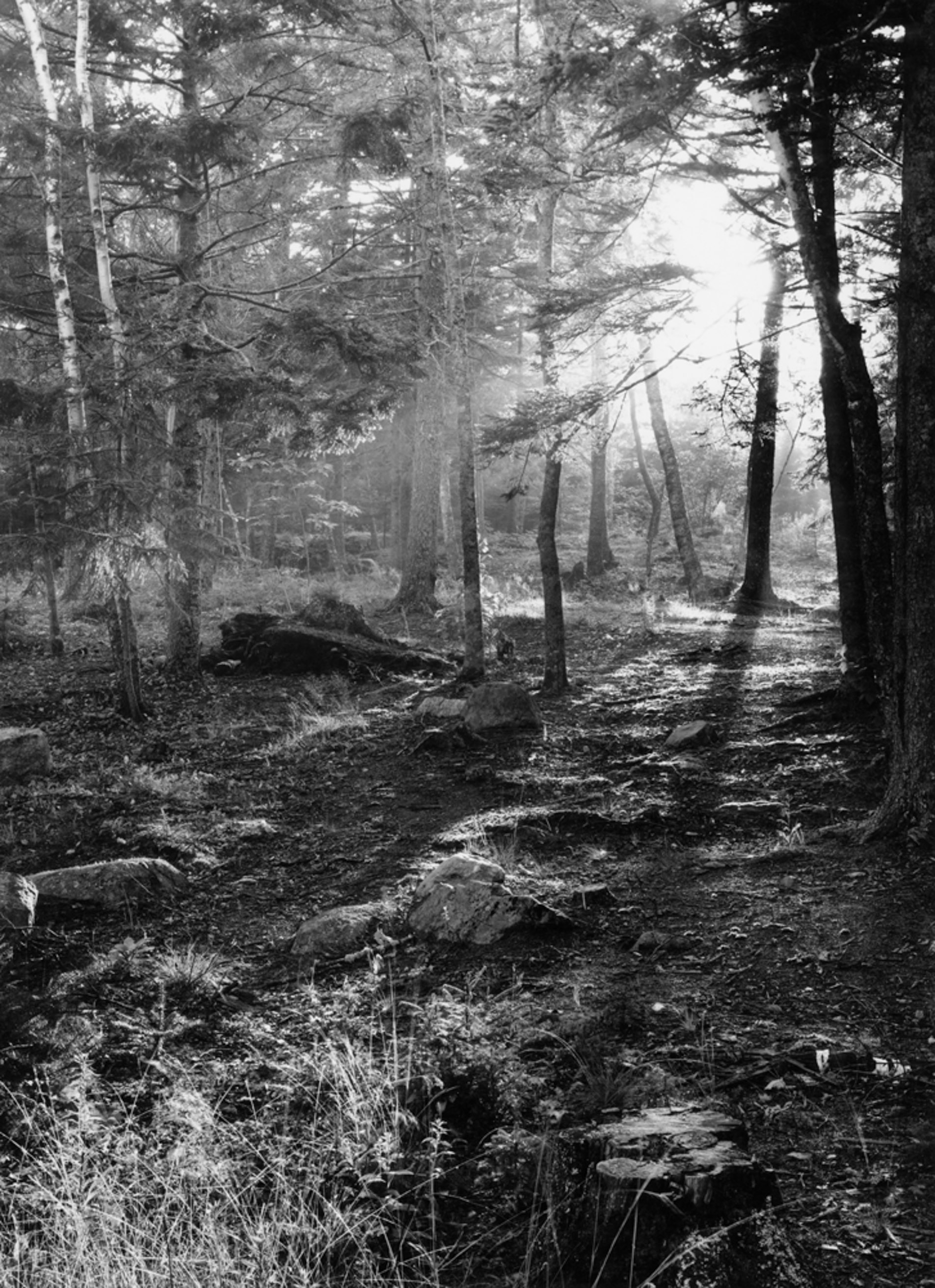 Giff's Path Sorrento, Maine
