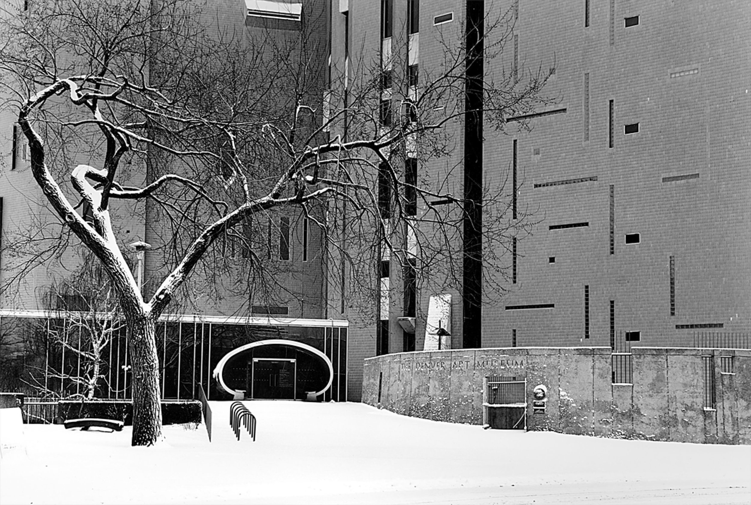 Elm Tree, Denver Art Museum Denver