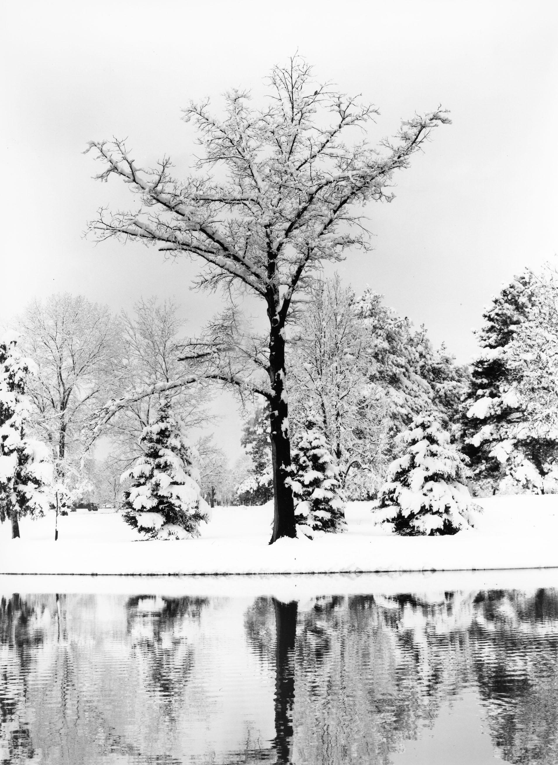 Elm Tree, Washington Park Denver, Colorado